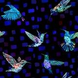 Картина колибри безшовная Предпосылка нарисованная рукой тропическая экзотическая Стоковое Изображение