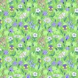 Картина красивых полевых цветков безшовная Стоковое Изображение RF