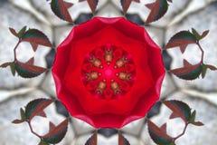 Картина красных роз калейдоскоп, мандала Стоковая Фотография