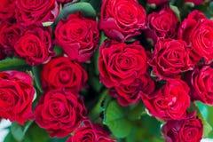 Картина красных роз стоковые фотографии rf