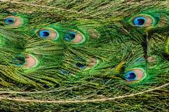 Картина красочных пер пер кабеля павлина Стоковое Изображение RF