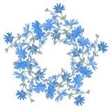 Картина круга с цикорием Круглый калейдоскоп цветков и флористических элементов Стоковые Изображения RF
