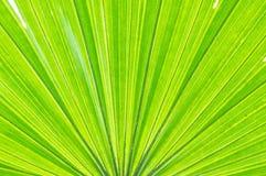 Картина крупного плана поверхностная абстрактная на свежих лист пальмы текстурировала предпосылку стоковые фото