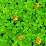 Картина клеверов St. Patrick безшовная с Стоковые Фотографии RF