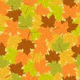Картина кленового листа безшовная, vector безшовная предпосылка: осень Стоковые Фотографии RF