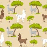 Картина ламы стоковые фото