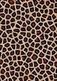 картина леопарда Стоковые Изображения