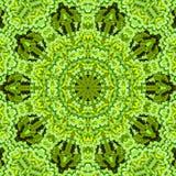 Картина лета цветка флористическая безшовная симметрия бесплатная иллюстрация