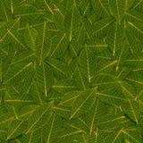 Картина листьев желтого зеленого цвета прозрачная Стоковые Фотографии RF