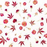 Картина листьев красного цвета и розовых роз на белой предпосылке Плоское положение, взгляд сверху Стоковая Фотография RF