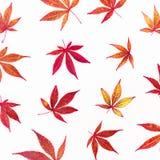 Картина листьев осени падения на белой предпосылке Плоское положение, взгляд сверху белизна осени изолированная принципиальной сх Стоковые Изображения RF