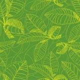 картина листьев свободной руки кофе Стоковая Фотография RF