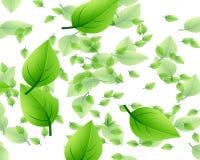 картина листьев случайная Стоковые Изображения