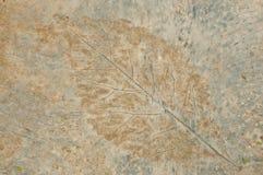 Картина листьев Стоковые Изображения RF
