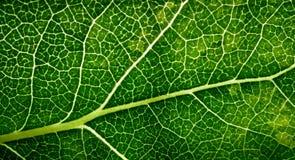 картина листьев Стоковое Изображение