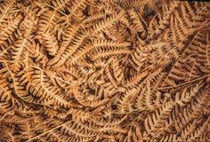 Картина листьев autemn сухих Предпосылка старых лист куста папоротника в лесе Стоковое фото RF