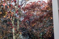 Картина лист падения Стоковые Изображения RF