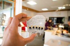 Картина магнита холодильника художественного произведения Handpainted на камне в картине птиц кивиа Вильямом Steyn Stonepainter в Стоковые Изображения RF