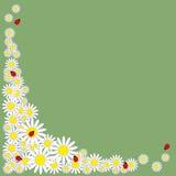 Картина маргариток с ladybirds иллюстрация штока
