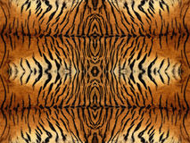 Картина меха тигра Стоковая Фотография RF