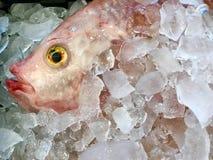 Картина морепродуктов на космосе стоковые изображения