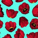 Картина нарисованных вручную чернил векторной графики безшовная красного тюльпана Стоковые Фото