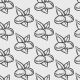 Картина орехового масла Argan безшовная Стоковые Фотографии RF
