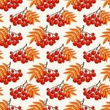 Картина осени безшовная с ягодами рябины Предпосылка вектора бесплатная иллюстрация