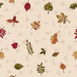 Картина осени картина листьев осени Красные, желтые и зеленые листья лесных деревьев безшовная текстура Польза как картина заполн Стоковое фото RF