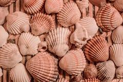 Картина от раковин лежа на деревянных плитах Стоковое Изображение RF