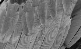 Картина пера ары Стоковое Фото