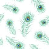 Картина пера павлина безшовная Стоковые Изображения RF