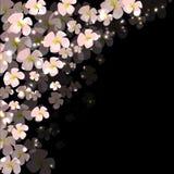 Картина пинка цветет этот пункт лоска Стоковое Изображение RF