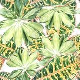 Картина покрашенных variegated листьев ладони Стоковая Фотография