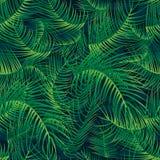 Картина полной страницы зеленого цвета лист ладони безшовная Стоковая Фотография RF