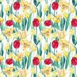 Картина поля тюльпанов весны акварели безшовная Стоковое Изображение RF
