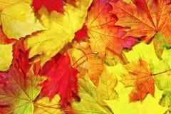Картина предпосылки осени, элементы кленовых листов Стоковые Изображения RF