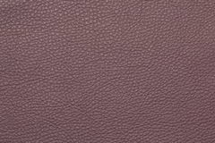 Картина предпосылки текстуры сирени кожаная grained Стоковая Фотография RF