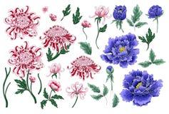Картина притяжки руки вектора безшовная хризантемы и пионов Стоковая Фотография