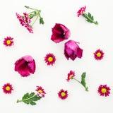Картина при цветки, ветви и листья изолированные на белой предпосылке Плоское положение, взгляд сверху стоковые фотографии rf