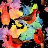 Картина птицы неба красная кардинальная в живой природе стилем акварели Стоковая Фотография RF
