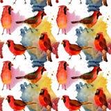 Картина птицы неба красная кардинальная в живой природе стилем акварели Стоковое Изображение RF