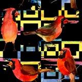 Картина птицы неба красная кардинальная в живой природе стилем акварели Стоковая Фотография