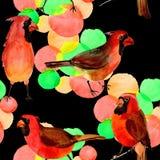 Картина птицы неба красная кардинальная в живой природе стилем акварели Стоковые Фотографии RF