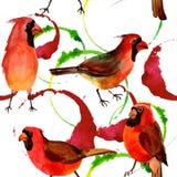 Картина птицы неба красная кардинальная в живой природе стилем акварели Стоковые Изображения RF