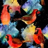 Картина птицы неба красная кардинальная в живой природе стилем акварели Стоковое Фото