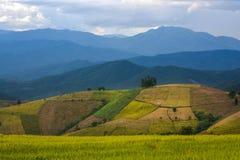 Картина плантации на горе Стоковая Фотография RF