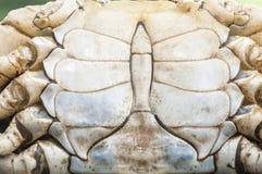 Картина раковины краба Стоковое Фото