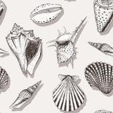 Картина 4 раковины моря бесплатная иллюстрация