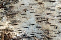 Картина расшивы березы стоковые изображения